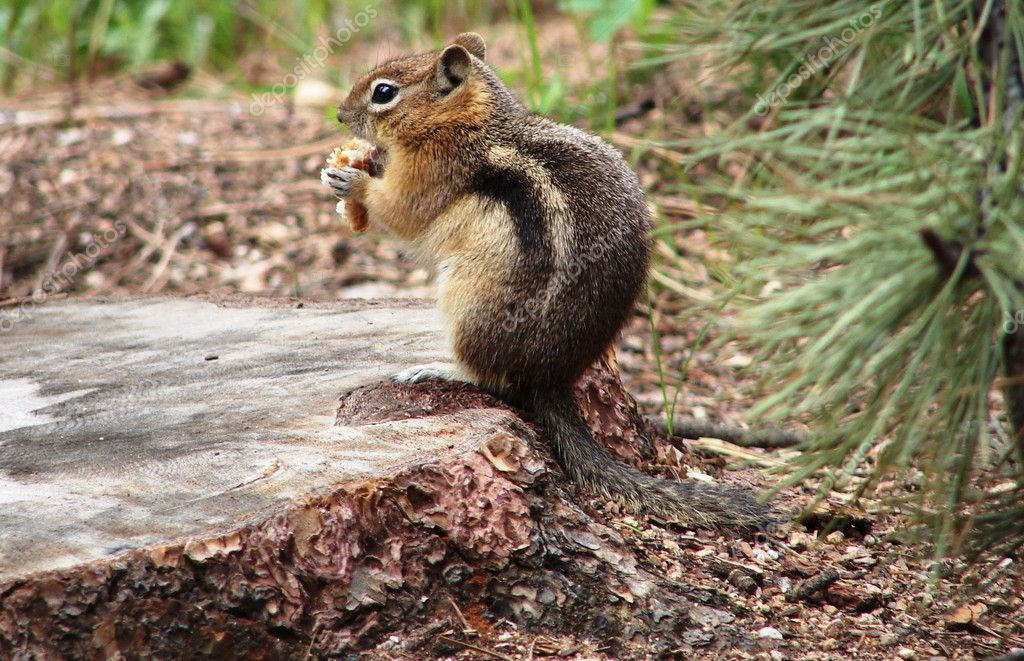 Squirrel on stump — Stock fotografie #11548005