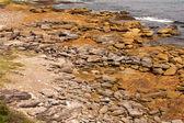 Rocky Coast, Gordons Bay, Sydney — Stock Photo