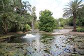Botanická zahrada, brisbane, austrálie — Stock fotografie
