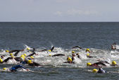 Triathlon swimmers — Stock Photo