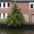 Stock Photo: Berlin river and tree