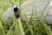 草と羽根 — ストック写真