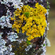 Royalty-Free Stock Photo: Moss and lichens on a tree close up