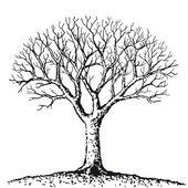 Bare tree — Stock Vector