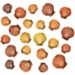 Royalty-Free Stock Vector Image: Shells background