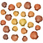 Shells background — Stock Vector