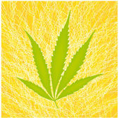 Leaf marijuana — Stock Vector