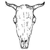 OX skalle — Stockvektor