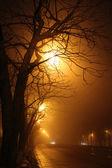 Trees at night — Stock Photo
