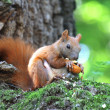 Squirrel on a tree — Stock Photo #11497721