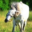 Horse on nature — Stock Photo