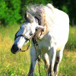 Horse on nature - Stock Photo