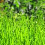 Fresh green lawn grass — Stock Photo #11690178