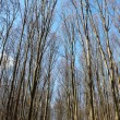 Trees without leaves - Stockfoto
