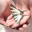 Butterfly on hand - Foto Stock