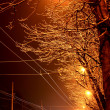 Stock Photo: Trees in the night