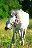 Horse on nature — 图库照片