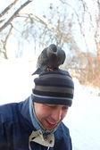 Dove on man's head — Stock Photo