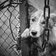 Sad dog black and white — Photo