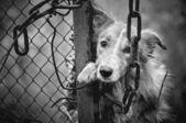Sad dog black and white — Stock Photo