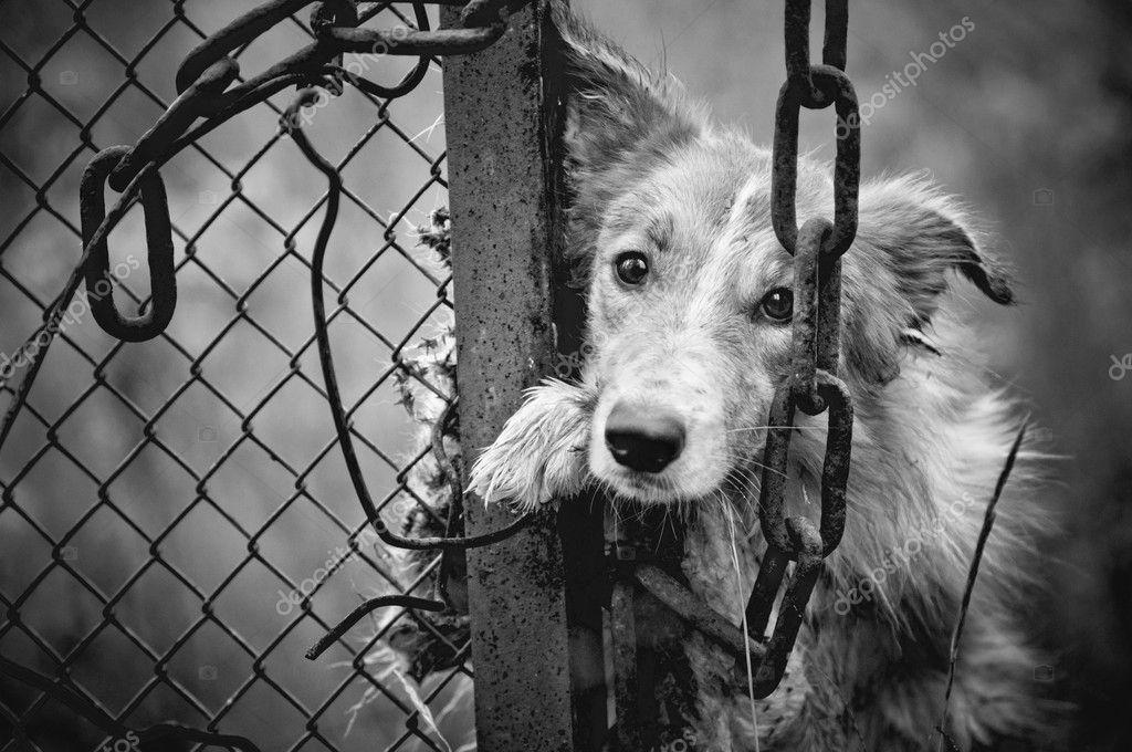 Sad Dogs Black And White Sad Dirty Dog Black And White