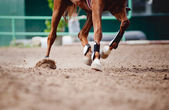 Horse legs Running — Stock Photo