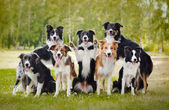 Group of happy dogs — Stock Photo