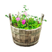 Set garden flowers in wooden bucket — Stock Photo
