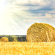 Stock Photo: Haystack in field