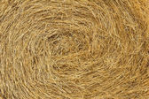 The texture of hay — Stock Photo