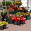 Flowers in market stall - Stock Photo