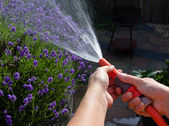 Watering the garden on a summer evening — Stock Photo
