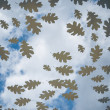 Autumn atmosphere on a glass plate with oak leaves - Stock Photo