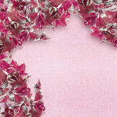 Rosa hojas frontera — Foto de Stock