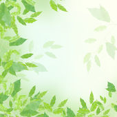 Green leaves border — Stock Photo