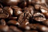 Close up coffee bean — Stock Photo