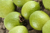 Cropped image of guava — Stock Photo