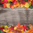 Fall background — Stock Photo #11288653