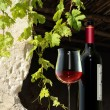 Stock Photo: At vigneron