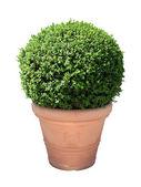 Pole roślina — Zdjęcie stockowe