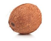 Coconut on white background — Stock Photo