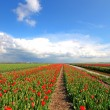 Typical wide dutch landscape in springtime in the Netherlands — Stock Photo