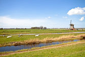 Historical windmill in typical dutch landscape — Stock Photo