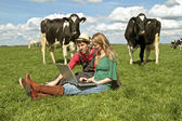 Young couple between the cows — Stock Photo