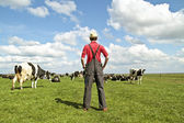 Farmer looking at his cows — Stock Photo