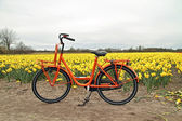 Orange bike and flower fields in the Netherlands — Foto de Stock