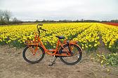 Orange bike and flower fields in the Netherlands — Foto de Stock