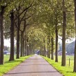 Countryroad in Netherlands — Foto Stock #11277943