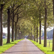 Countryroad in Netherlands — Stock Photo #11277943