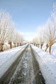 Snowy countryroad — Stock Photo